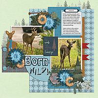 10-02-10--tinci-wd-deer.jpg
