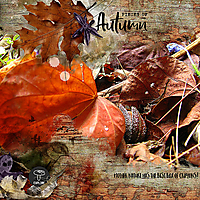 12X12-AUTUMN-LEAVES---PIECES-OF-AUTUMN-600.jpg