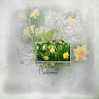12X12-DAFFODILS---NATURE-IS-AWESOME.jpg