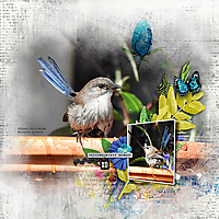 12X12-WRENS---WELCOME.jpg