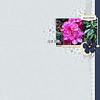 12x12-BOWRAL-MOTEL-RHOD-FLOWERS--PICTURE-PERFECT.jpg