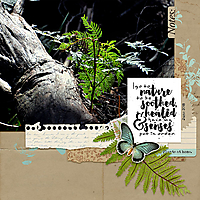 12x12-FERN---SOOTHING-NATURE.jpg