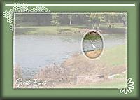 15-ATC-2020-006-Great-Egret.jpg