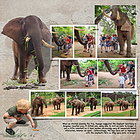 19_04_08_Elephant-Sanctuary-Hazyview_600X600.jpg