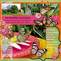 2013June-DGD-Butterflies.jpg