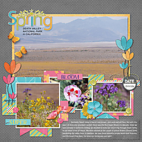 2016-AZ-trip_Death-Valley-Super-Bloom.jpg