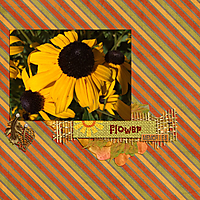 2017-08-sunflowers.jpg