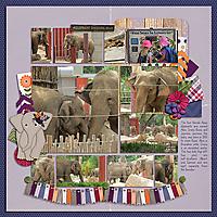 2019-10-01_LO_2017-08-13-Albuquerque-Zoo---Elephant.jpg