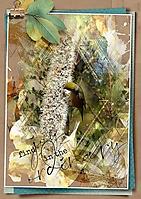 A4-BIRD---FIND-JOY-700PX-WEB.jpg