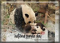 ATC-2020-036-National-Panda-Day.jpg