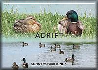 Adrift1.jpg