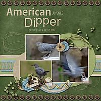 American_Dipper_small.jpg