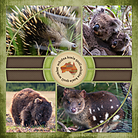 AussieanimalsCompass-3WEBSMALL.jpg