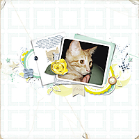 BabyRoxie_2008_600.jpg