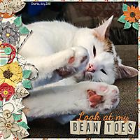 Bean_Toes.jpg