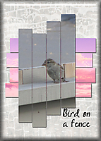 Bird-on-a-fence.jpg