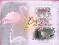 Birds-of-a-feather3.jpg