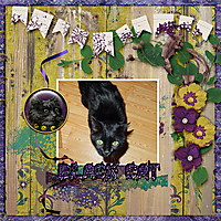 Black-cat2.jpg