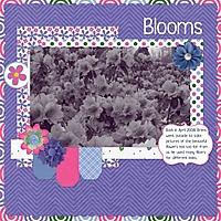 Blooms2.jpg