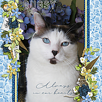 Bugsy-Always-in-Our-Hearts-HT-112619.jpg