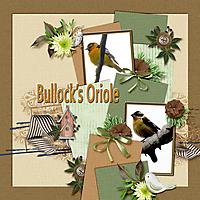 Bullock_s_Oriole_small.jpg
