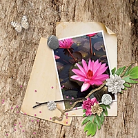 CT-Song-of-Spring-250.jpg