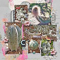 Cactus-collageWEB.jpg
