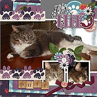 Cat_s-Meow.jpg