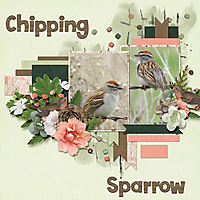 Chipping_Sparrow_small.jpg