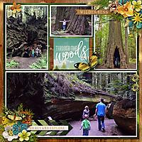 DFDbyT_Adventure-Redwood2015.jpg