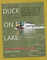Duck-on-the-Lake.jpg