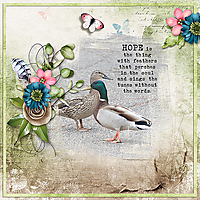 Ducks-copy.jpg