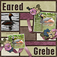 Eared_Grebe_paper_piecing_vol1_Legacy.jpg