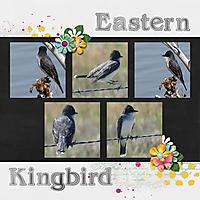 Eastern_Kingbird-2017_June_small.jpg