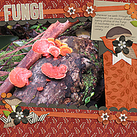 Fungi---Nature-Walk-kit.jpg