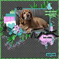 Get_a_Dog_MFish_AFullHeart_rfw.jpg