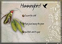 Hummingbird21.jpg