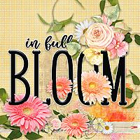 In_full_bloom2.jpg