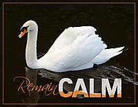 Jan-6-Torn-Title--Remain-Calm.jpg