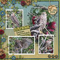 July_2020_sml_maura_b_sparrowhawk_MSG_Nature_Trail_Aprilisa_PicturePerfect172_template4.jpg