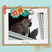 KD_KittyCata.jpg
