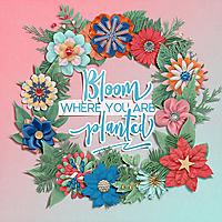 Kristin-Aagard-Winter-Gradients-Winter-Blooms.jpg