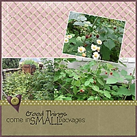 Lesson-6H---Raspberries.jpg