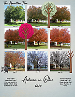 MOC-20_Autumn-in-Ohio.jpg