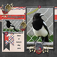 Magpie_small.jpg