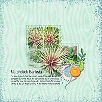 Matchstick-Banksia-_web_.jpg