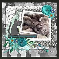 Meow7.jpg