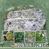 Mountain_Flowers_web.jpg
