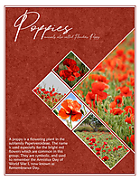 Nov-2019-Monthly-Muse-Week-1---Poppies.jpg