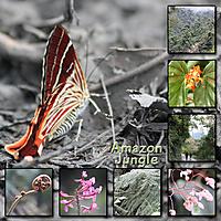 Peru_jungle_amazon-small.jpg